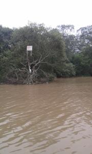 """Namanya pohon """"berembang"""" salah satu pohon air dan seekor burung yang tertangkap kamera :D"""