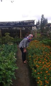 Tukang bunga adalah tempat pavorit saya kalo lagi di Berastagi. Bisa berjam2 muter disini doang